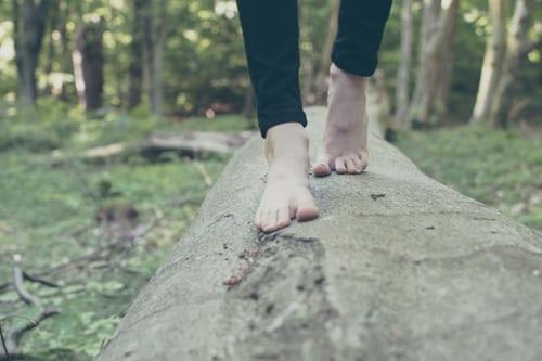 Neglesvamp – hvad er det?
